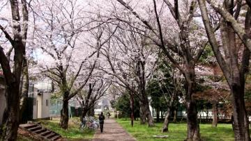 日本留学对托福的要求,需要达到多少分