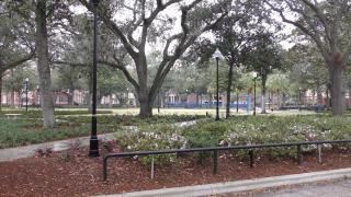 留学佛罗里达大学条件,详解本科和硕士入学要求